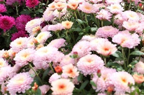 Centre de jardinage Abbotsford (Pépinière Abbotsford)